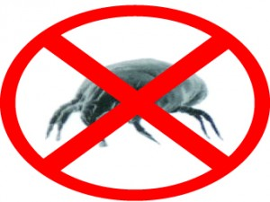 dust-mite-mattress-cleaning