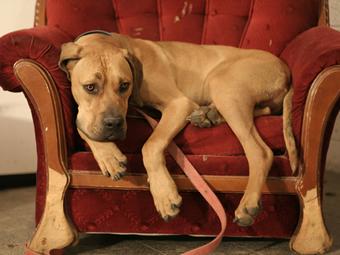 slide-upholstery4